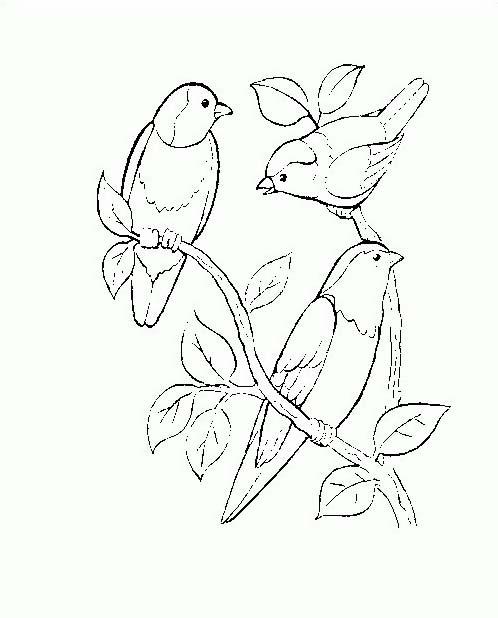 Uccello da colorare 342