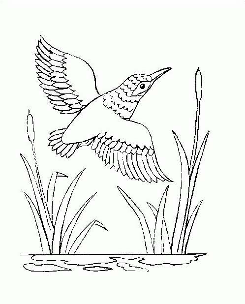 Uccello da colorare 343