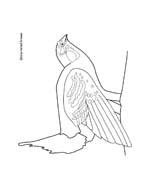Uccello da colorare 344