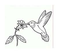Uccello da colorare 348