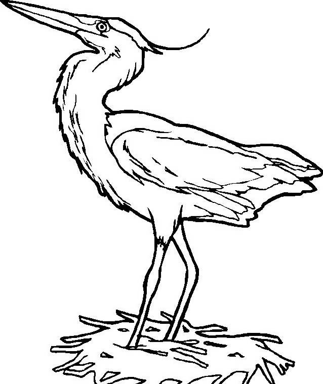 Uccello da colorare 354