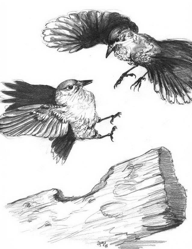 Uccello da colorare 356