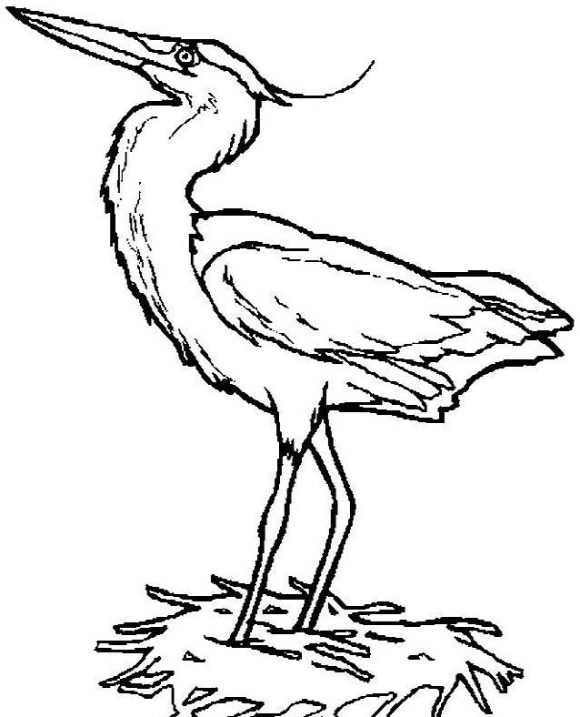 Uccello da colorare 359