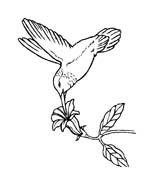 Uccello da colorare 360