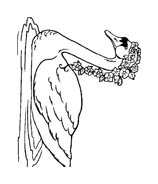 Uccello da colorare 363
