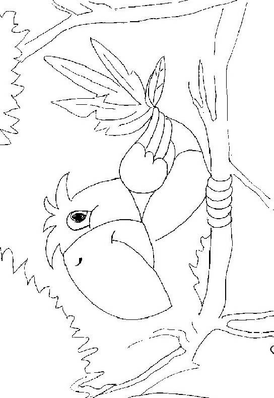 Uccello da colorare 373