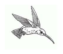 Uccello da colorare 380