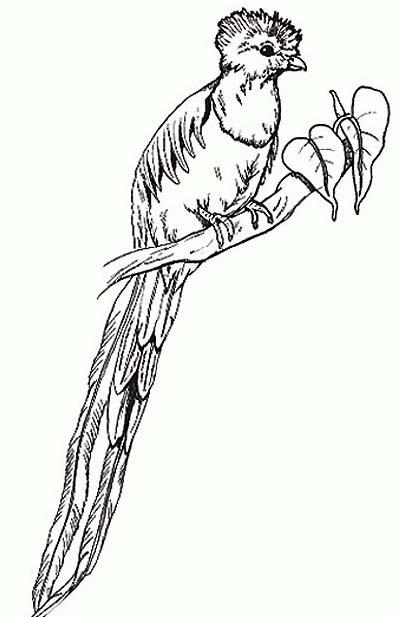 Uccello da colorare 381
