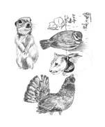 Uccello da colorare 383