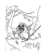 Spiderman da colorare 236
