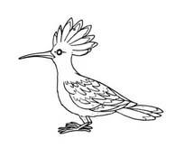 Uccello da colorare 384