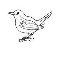 Uccello da colorare 386