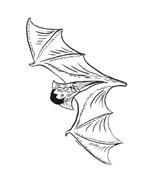 Vampiro da colorare 22