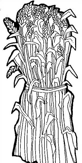 Verdura da colorare 81