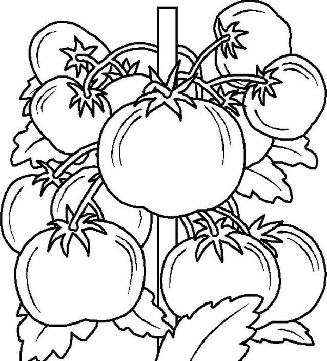Verdura da colorare 109