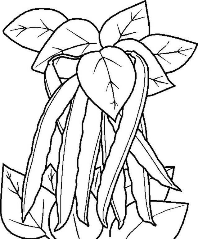 Verdura da colorare 115