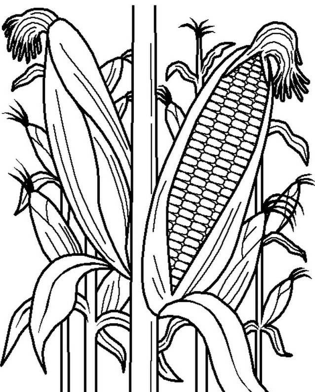 Verdura da colorare 117