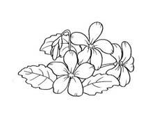 Fiore da colorare 364