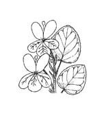 Fiore da colorare 366