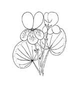 Fiore da colorare 367