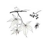 Arbusto da colorare 56