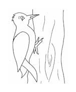 Uccello da colorare 388