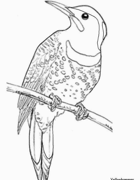 Uccello da colorare 389