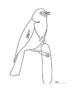 Uccello da colorare 390