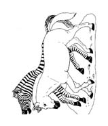 Zebra da colorare 13
