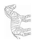 Zebra da colorare 17