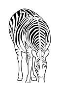 Zebra da colorare 20