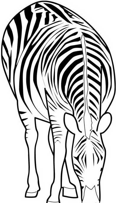Zebra da colorare 20