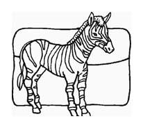 Zebra da colorare 22