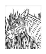 Zebra da colorare 23