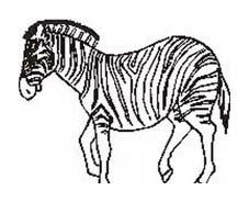 Zebra da colorare 25