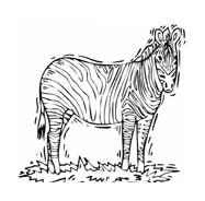 Zebra da colorare 32