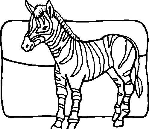 Zebra da colorare 35